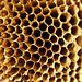 Panal, qué interesante construcción; deberíamos aprender de las abejas.